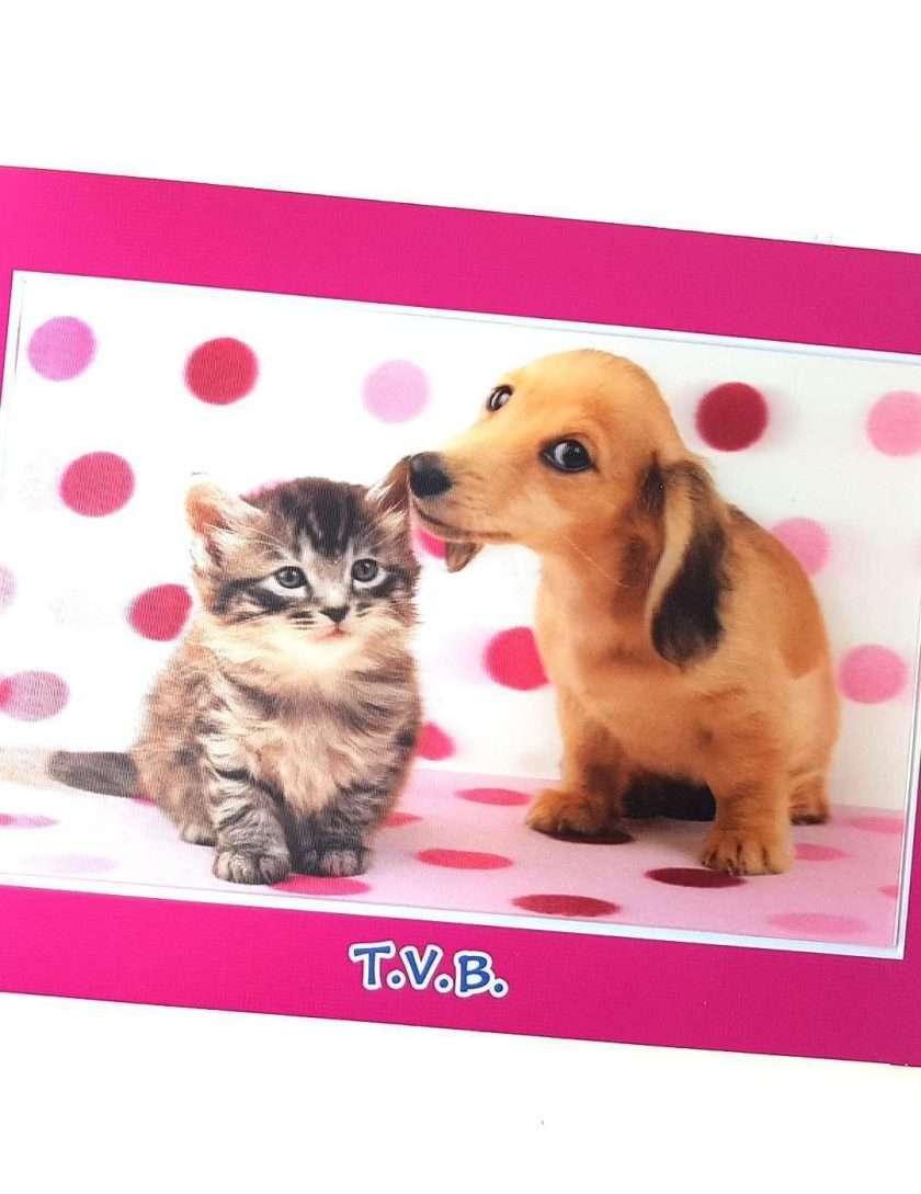 Come cane e gatto-0